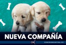 perros para reclusas de la cárcel distrital