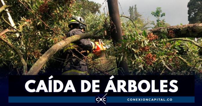 Cerca de 300 árboles se han caído en Bogotá durante el 2019