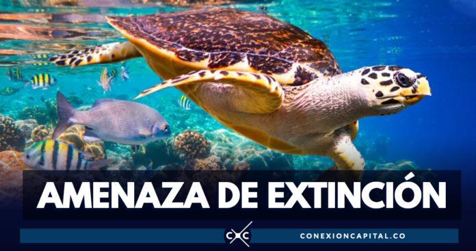 Un millón de especies animales y vegetales están amenazadas de extinción