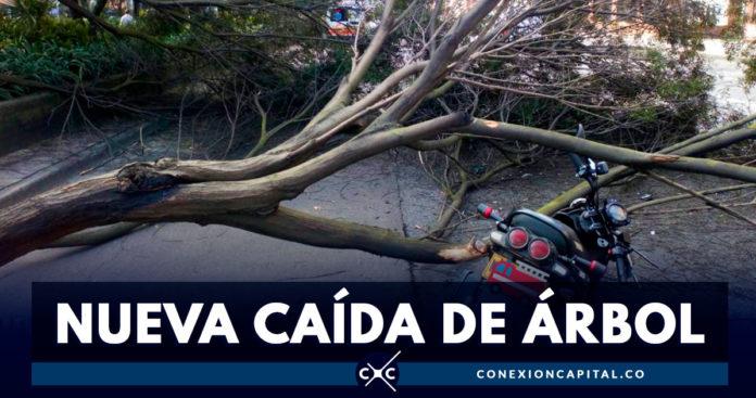 Motociclista resultó herido tras caída de un árbol