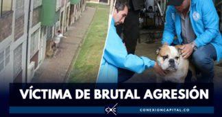 maltrato de perro en Bogotá