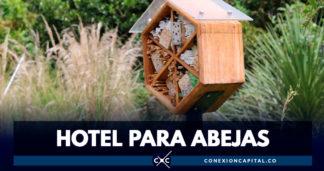 Hoteles para abejas en el Jardín Botánico