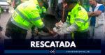 Autoridades recuperan boa constrictor en el occidente de Bogotá