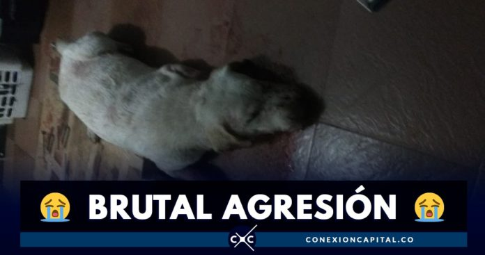 perra víctima de burtal agresión