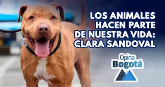 Bogotá, ciudad pionera en protección animal en Colombia