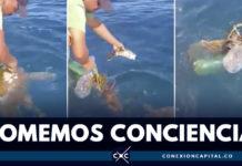 EN VIDEO: tortuga pierde aleta por culpa de la basura en el mar