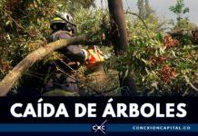 caída de árboles en Bogotá