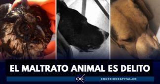 casos de maltrato animal en Bogotá