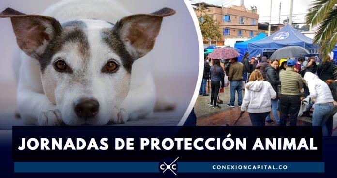 microchips de perros en ciudad bolívar