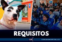 servicio social en proteccion animal