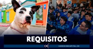 servicio social en proteccion animal