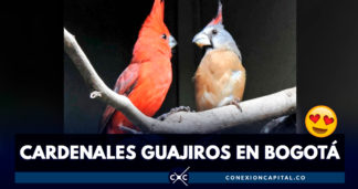 cardenal guajiro en bogotá