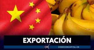 Acuerdo permitirá exportar banano colombiano al mercado chino
