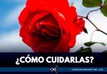 La rosaleda, el tesoro perfumado del Jardín Botánico de Bogotá