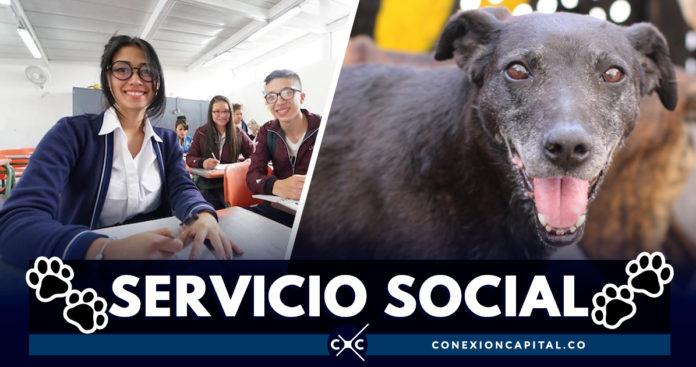 Servicio social se podrá prestar en el Instituto de Protección Animal
