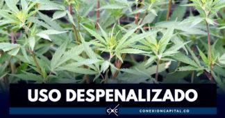 Descriminalizan consumo de marihuana en Nueva York
