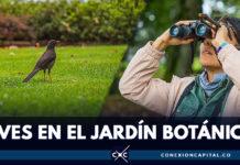 Participe en la jornada de observación de aves en el Jardín Botánico