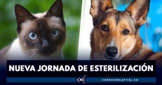 esterilizacion canina