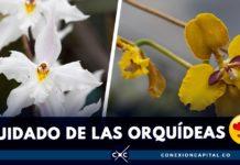 cómo cuidar una orquídea en casa