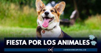 fiesta por los animales en Bogotá