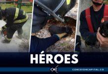 perro rescatado por bomberos