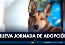 adopción de mascotas este domingo