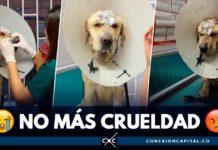 perro maltratado en Bogotá