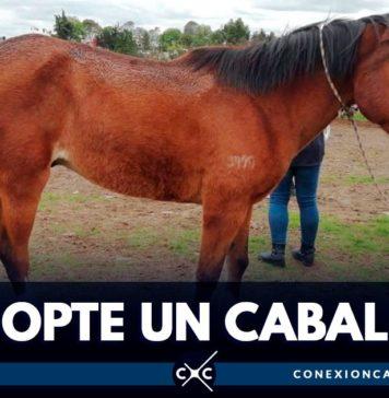 adopción de caballos en Bogotá
