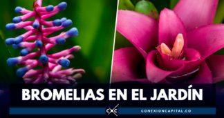 bromelias-jardin-botanico