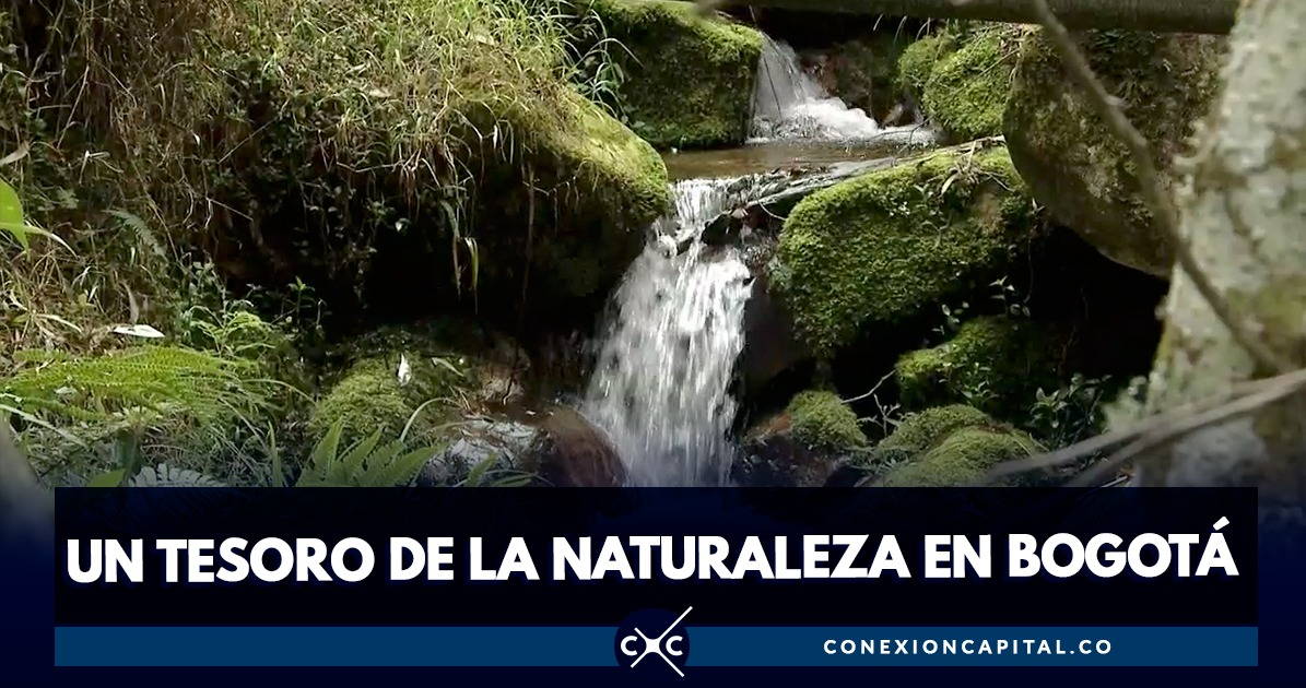 El video de la quebrada La Vieja que te hará amar este lugar - Canal Capital