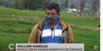 Productores de hierbas aromáticas de Chipaque en crisis