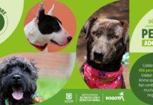 Adopción de perros en Bogotá.