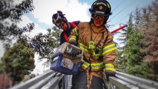 Grupo BRAE encargado del rescate de los animales en emergencias
