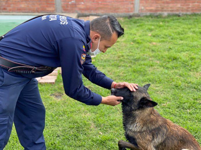 Centro de entrenamiento canino.