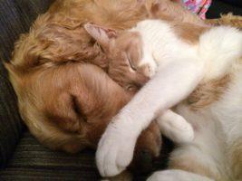 Esterilización de perros y gatos.